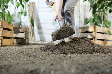 woman plant in the vegetable garden, work by digging spring soil with shovel, near wooden boxes full of green plants, closeup
