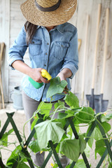 woman in vegetable garden sprays pesticide on leaf of plant with caterpillar, care of plants for growth concept