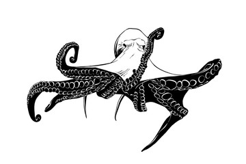Vector engraved style illustration for posters, decoration and print. Hand drawn sketch of octopus in black isolated on white background. Detailed vintage etching style drawing.