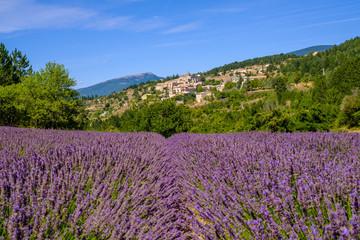 Canvas Prints Lavender Vue sur le village Aurel en Provence, France. Champ de lavande au premier plan.