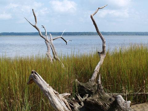 Fallen tree along the waters edge