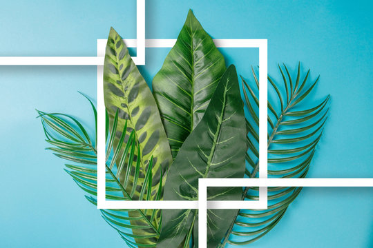 Palm leaves background concept.