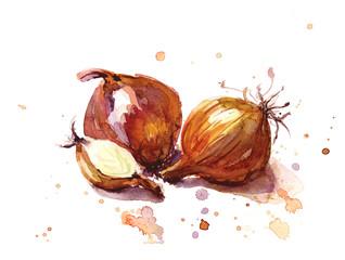 Fototapeta The onion vegetables, hand drawn sketch. Watercolor illustration obraz