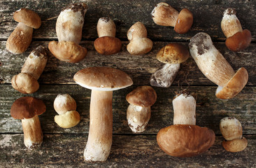Mushroom Boletus over Wooden Background. Autumn Cep Mushrooms. Cooking delicious organic mushroom. Gourmet food