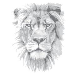 Lion head. Hand drawn vector illustration