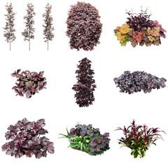 紫色のガーデン庭木植物