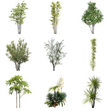 庭の樹木切り抜き素材