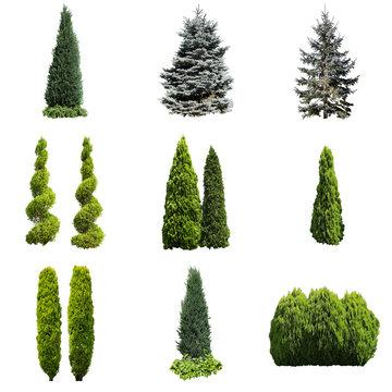 ガーデニング庭木切り抜き素材