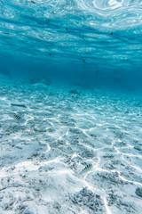 Tahiti Snorkel