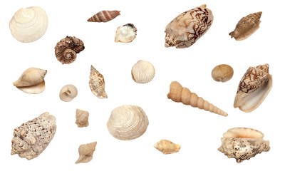 beautiful collection of different types of shells, isolated on white background