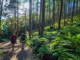 two girls hiking through a beautiful green forest on a sunny day with fern