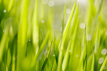 Abstract background with bokeh with a green grass.