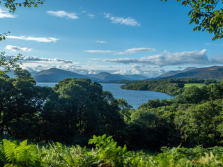 overview at a beautiful lake (loch lomond) on a sunny day with ferns