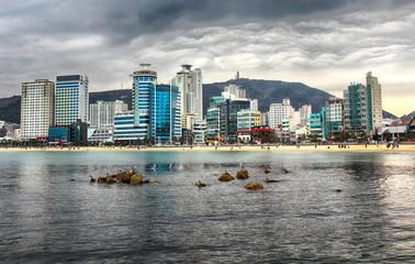 Seagulls on rocks in Gwangalli Beach, Busan, South Korea.