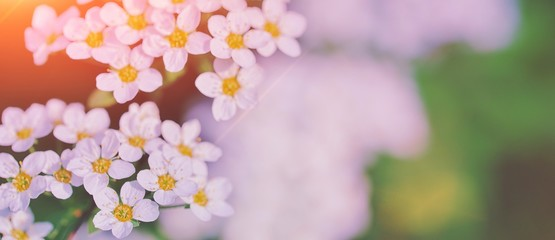 Beautiful floral spring abstract background of nature. Branches of blossoming flower macro with soft focus background. Easter and spring greeting cards, copy space. Spring picture white flowers tree