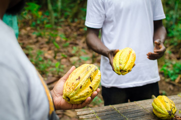Men holding cocoa pods
