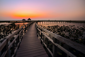wood bridge in lake water lily