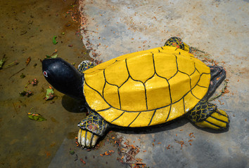 Yellow Turtle statue in the water pond garden Wall mural