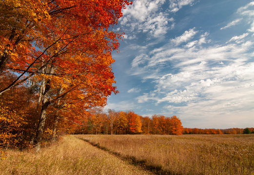 531-27 Newport Meadow Autumn
