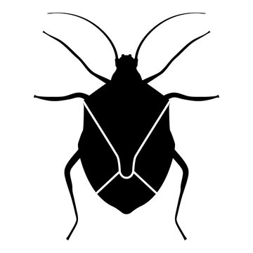 Bug Bedbug Chinch True bugs Hemipterans Insect pest icon black color vector illustration flat style image