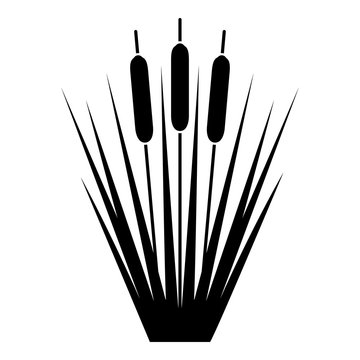 Reed Bulrush Reeds Club-rush ling Cane rush icon black color vector illustration flat style image