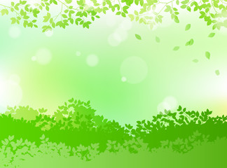 fresh green and sunbeams leaves background material