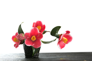 camellia flowers on a white background