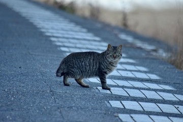 Stray cats〜狸じゃないよ。