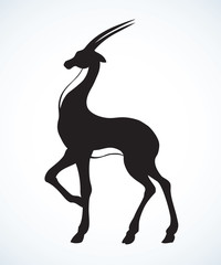 Antelope. Vector drawing