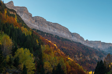 Beech forest, Ordesa and Monte Perdido National Park, Huesca province, Spain
