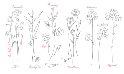 Fototapeta Wildflowers one line drawings set.