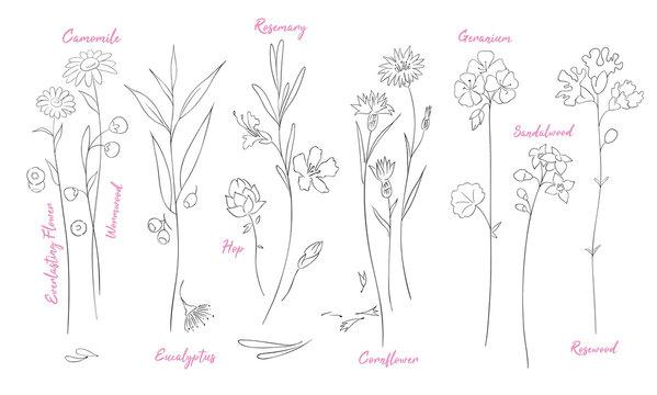 Wildflowers one line drawings set.