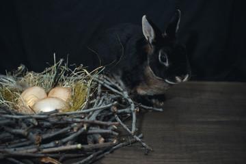 Golden bird eggs in a nest next to a black rabbit on a dark background.