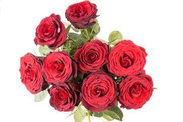 close up of a Bunch of beautiful dark red roses