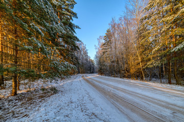 Pine forest, winter sunny day. The road passes through the forest
