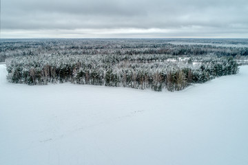 Snow-covered forest, fields covered with white snow. Typical European winter landscape. It's a nasty day.