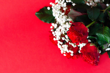 Bouquet of fresh roses on a red background.
