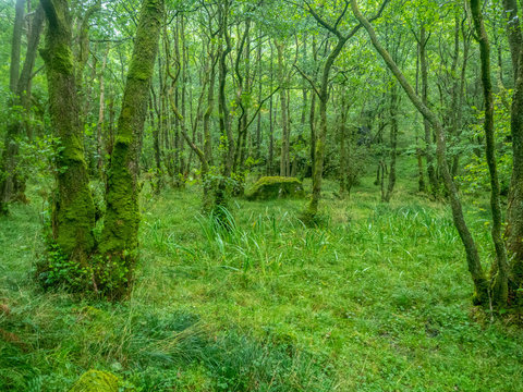 green forest in scottish nature