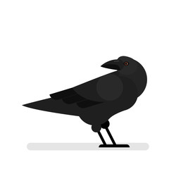 Black raven. Bird with dark feather and large wing