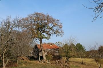Colorful Trees in Autumn Season. artvin/savsat