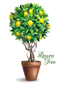 Lemon decorative tree in pot on white background. Lime tree. Houseplant. Vector illustration.