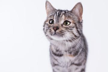 Katze hat hunger und ist neugierig