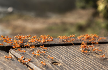 ants running animal insect