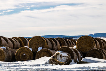 Haybales in the snowy field wating for the cows, Springbank, Alberta, Canada