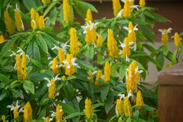 yellow flowers in garden and bird