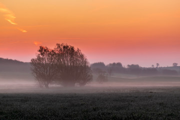 Aluminium Prints Salmon Morgenrot mit Nebel und Weiden, Schleswig-Holstein