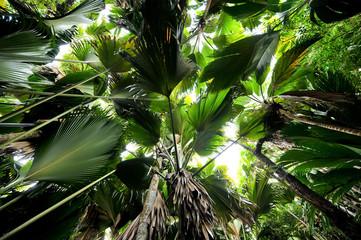 Palmen Dschungel Seychellen