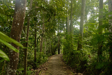 Narrow path leading to the jungle.