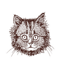 Door stickers Hand drawn Sketch of animals Vintage portrait of domestic cat, graphical vector illustration
