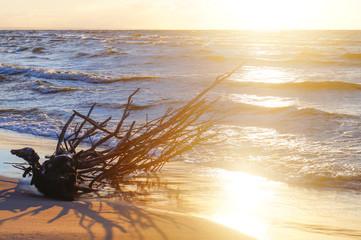 morze i konar